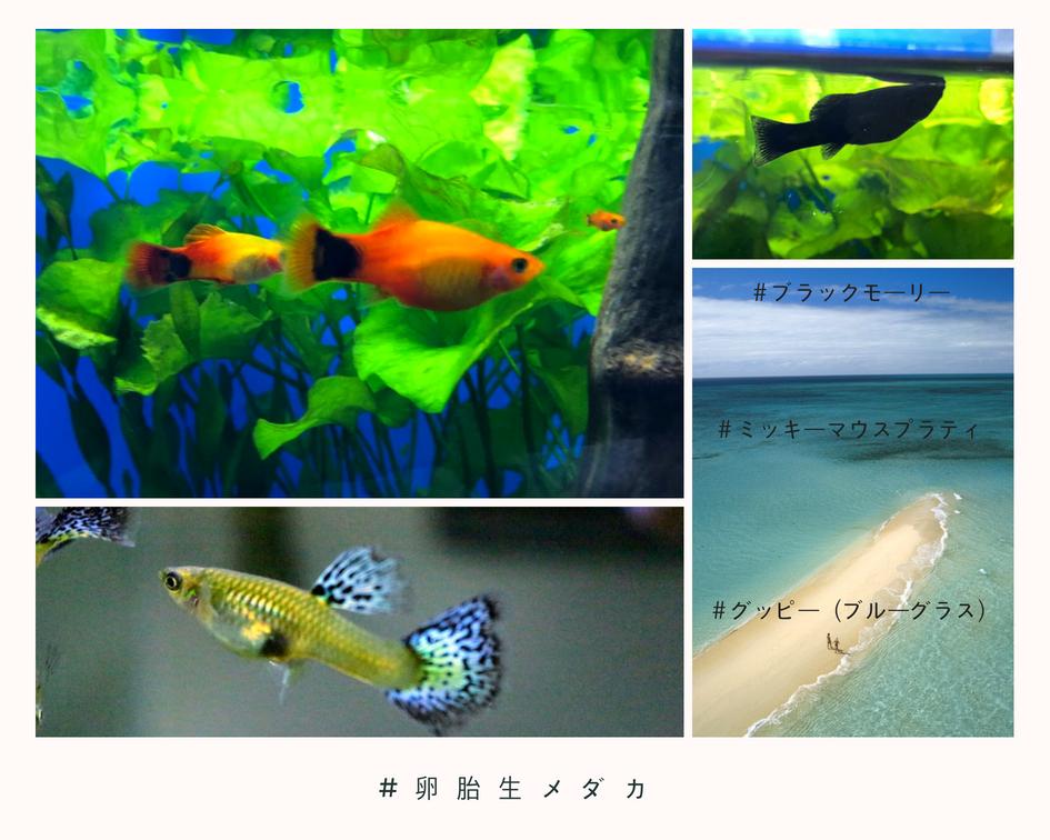 f:id:nonosuki:20180725145019j:plain