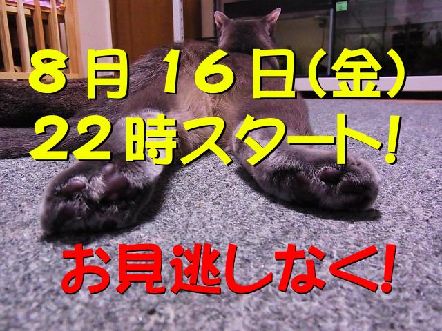 RIMG0091_20130801063623064_20130813062727c12.jpg