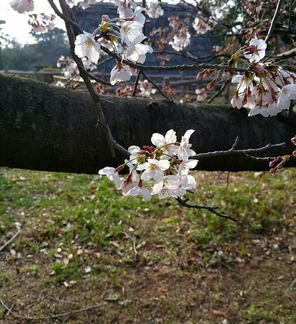 f:id:nonsugar38:20170330182008j:image