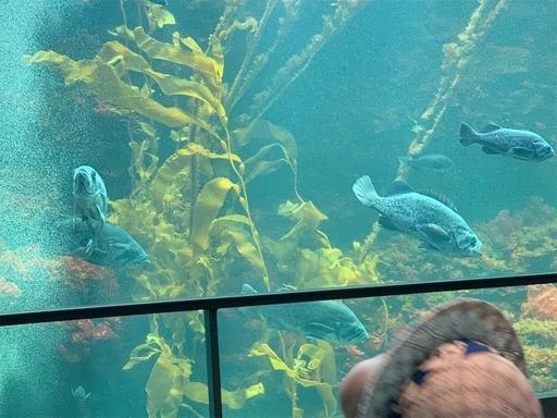 葛西臨海公園水族館の水槽