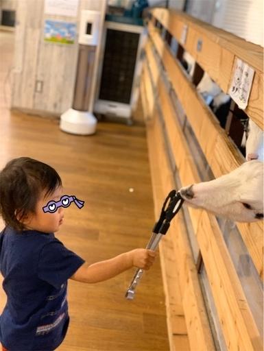 大手町牧場でヤギに餌やり