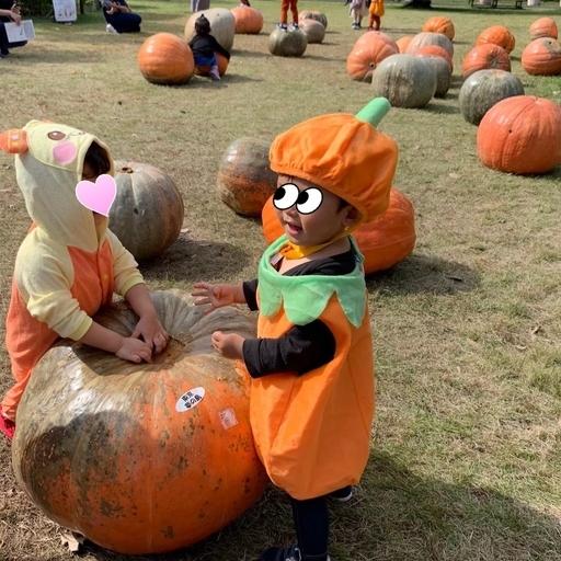 夢の島熱帯植物館のオバケかぼちゃ