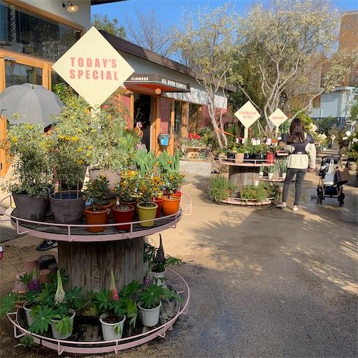 SOLSO PARKの植物達