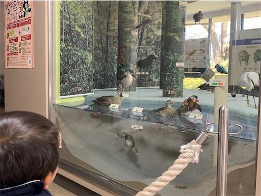 自然教育園の館内