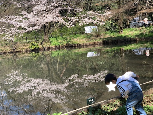 水面に映る桜と子ども