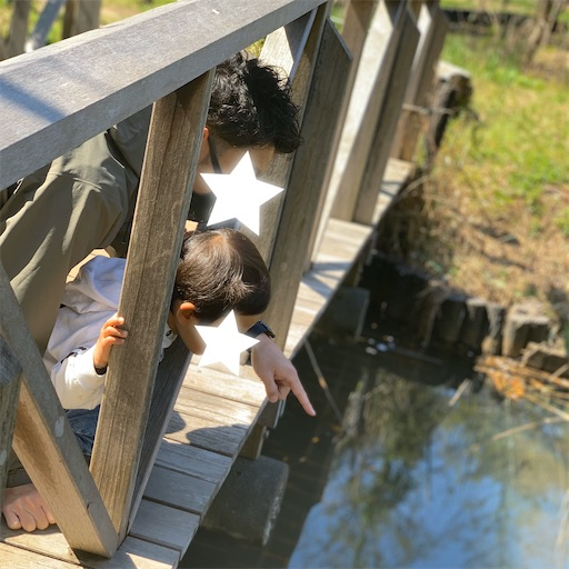 池の魚を観察する息子