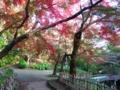 [富山県]2016.11.12高岡古城公園の秋