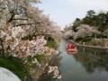 [富山県]2017.4.14富山市・松川の桜 withB(そればっか)