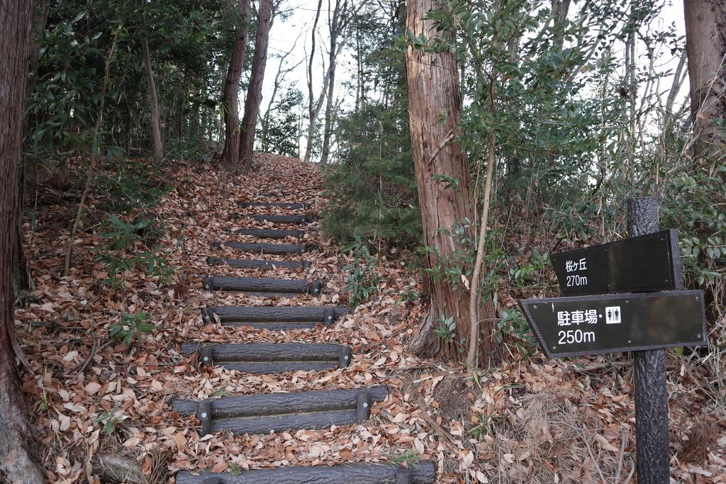 f:id:noramatsu:20190225213808j:plain