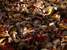 f:id:noraneko222:20101119164957j:image:left