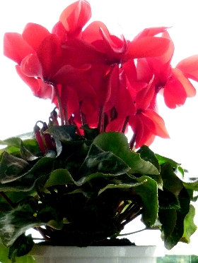 f:id:noraneko222:20101222190428j:image