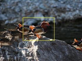 f:id:noraneko222:20110131163113j:image:left