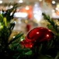 [ラグーナ蒲郡][クリスマス]