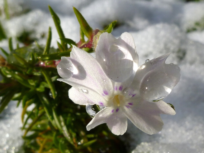 f:id:noraneko222:20111226191545j:image
