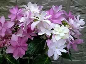 f:id:noraneko222:20120625154102j:image