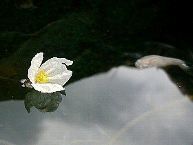 f:id:noraneko222:20120717161020j:image