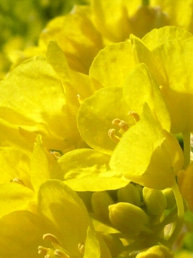 f:id:noraneko222:20130121204229j:image