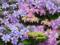 [フラワーラグーン][紫陽花]