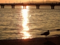 [竹島海岸][夕陽]