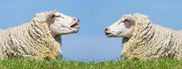 挿絵(羊達の会話)
