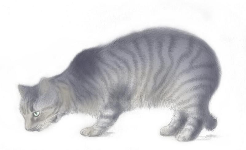 f:id:norayagi:20090614012651j:image