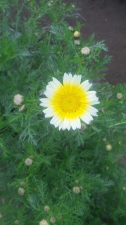 f:id:nori-go:20110501141835j:image