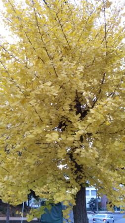 f:id:nori-go:20111201142548j:image