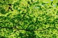 北茨城の森林5