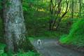 北茨城の森林3