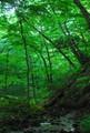 北茨城の森林1