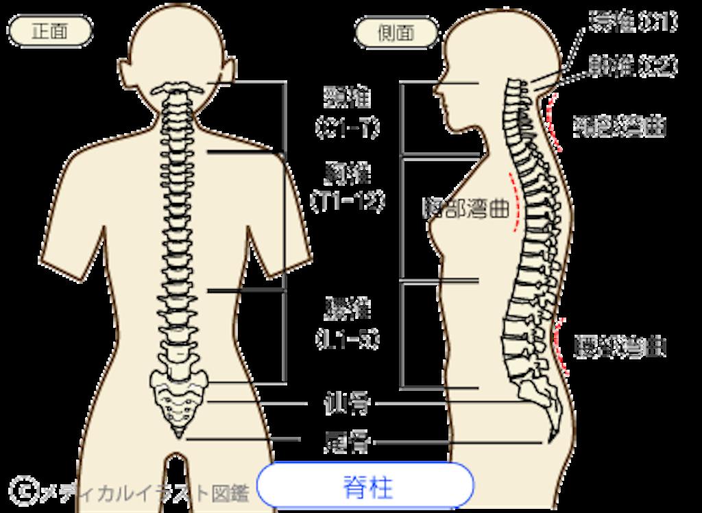 f:id:norichiropractic:20170212110833p:image