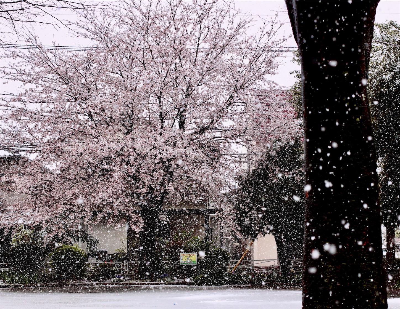f:id:noriharu-katakura:20200329112208j:image