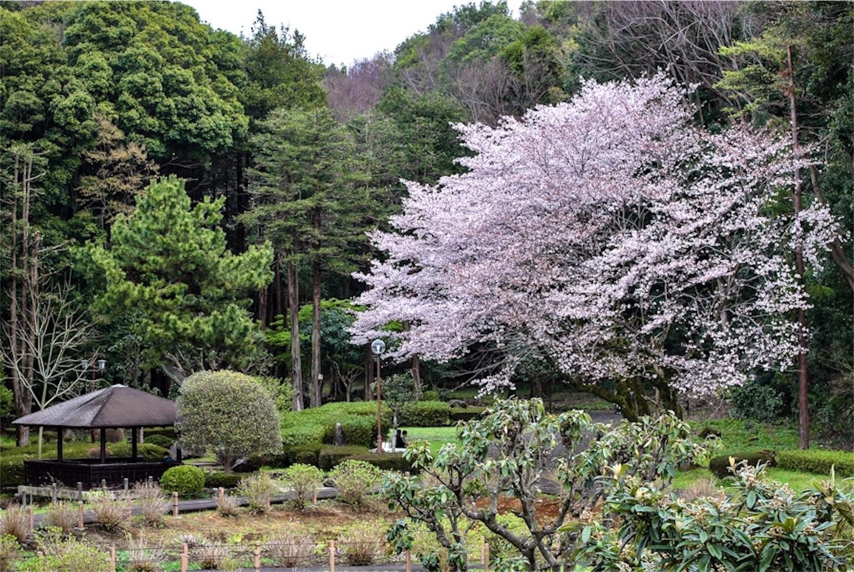 f:id:noriharu-katakura:20200408234202j:image