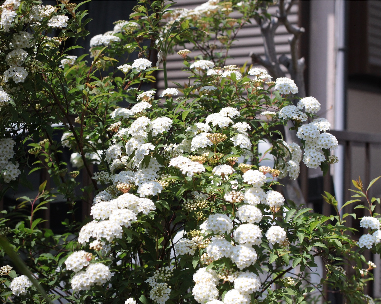 f:id:noriharu-katakura:20200410134724j:image
