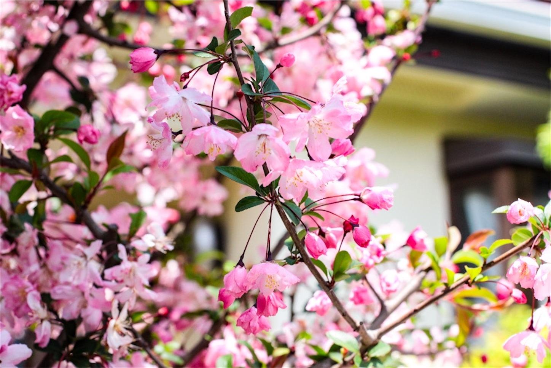 f:id:noriharu-katakura:20200410155700j:image
