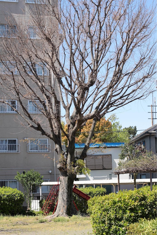 f:id:noriharu-katakura:20200414131648j:image