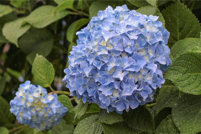 f:id:noriharu-katakura:20200601181201j:image