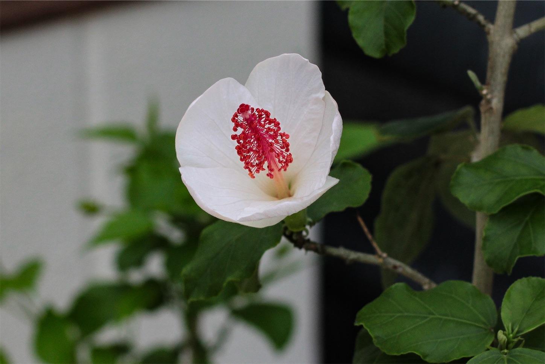 f:id:noriharu-katakura:20200614214254j:image