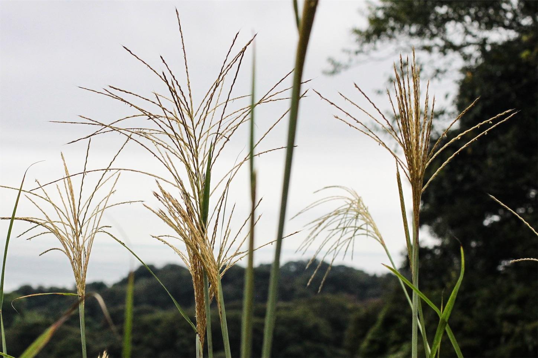 f:id:noriharu-katakura:20200913221149j:plain