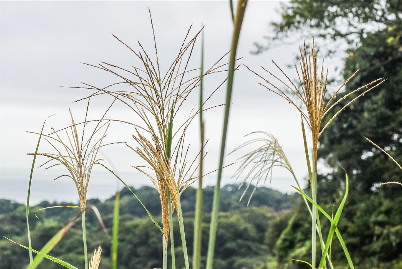 f:id:noriharu-katakura:20201101005130j:plain
