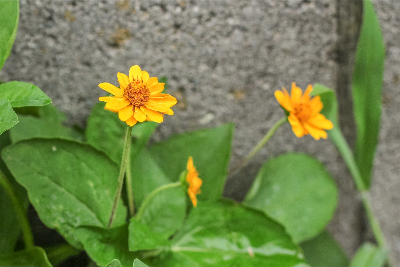 f:id:noriharu-katakura:20201103081641j:plain