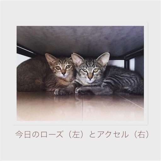 f:id:noriko3131:20180720184339j:image