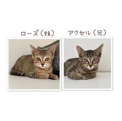 f:id:noriko3131:20180802152522j:plain