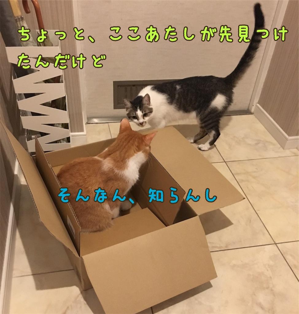 f:id:norikowatanabe7:20190812144457j:plain
