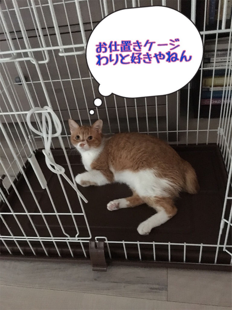 f:id:norikowatanabe7:20190812144500j:plain