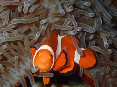サンゴとか魚