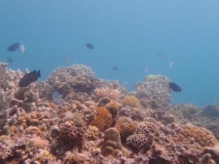 岩の近くにいる魚達