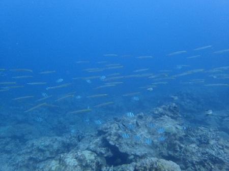 魚の群れと遭遇