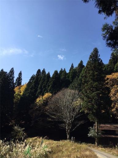 f:id:norimurata:20201118231846j:image