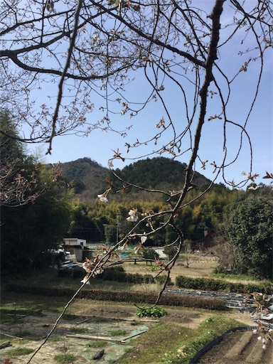 f:id:norimurata:20210319231411j:image